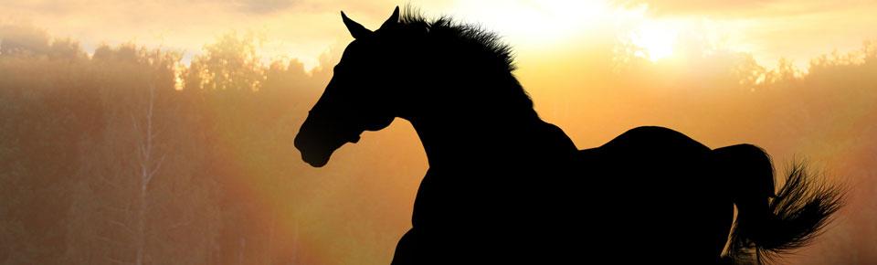 Jenkinsons Equestrian Wholesalers