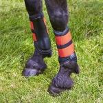 Elico Langley Brushing Boots - Burnt Orange