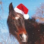 Christmas Cards: Horse Santa Hat (x6)