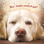 Christmas Cards :   Waiting for Santa