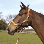 Elico Ryedale Headcollar - Pony
