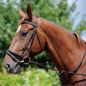 Whitaker Elland Flash Bridle