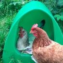 Poultry Corner image